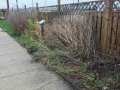 Native Plant Garden at 1201 Barnegat Avenue before the clean up.