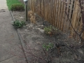 The garden ready for some new native plants.